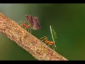 leafcutter-ants-by-nops