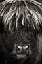 Highlander by Michal Tekel