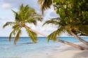 Maldivian Vista