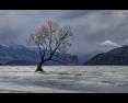 PDI - A MOMENT OF LIGHT AT THE LONE TREE OF WANAKA