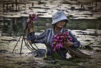 Lotus picker