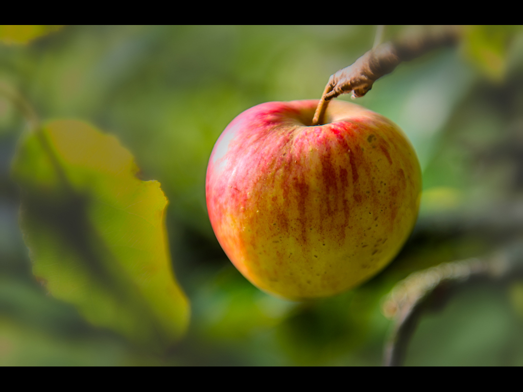 AN APPLE A DAY by Tom Cross