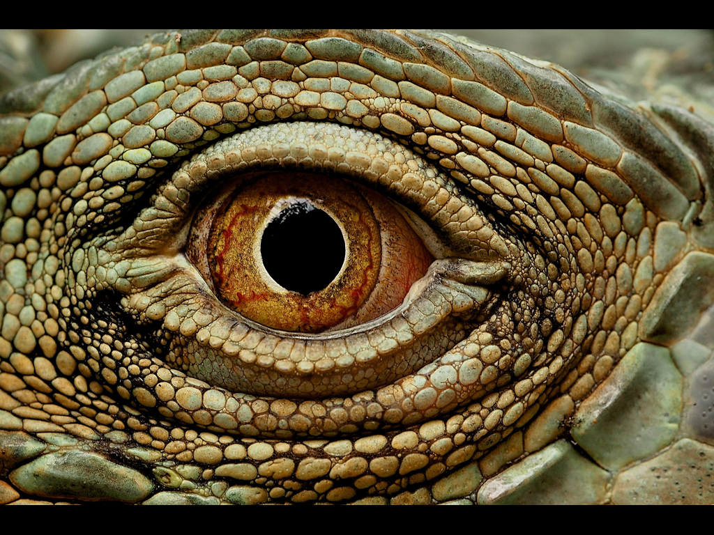 EYE OF THE IGUANA by John Purchase