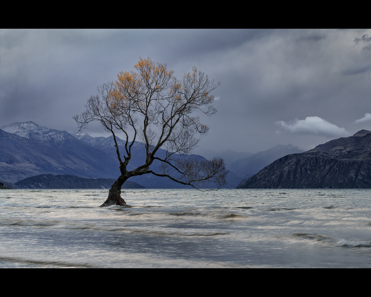 A MOMENT OF LIGHT AT THE LONE TREE OF WANAKA by Chris Newham