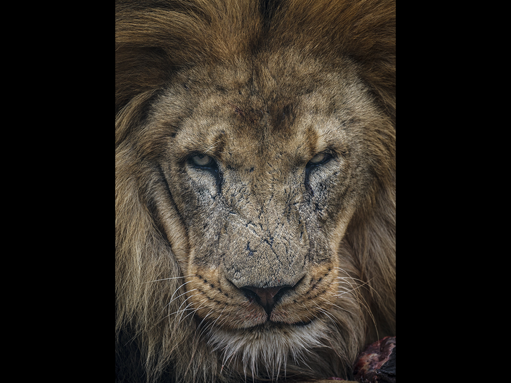 THE LION'S SHARE by Sue Hartley