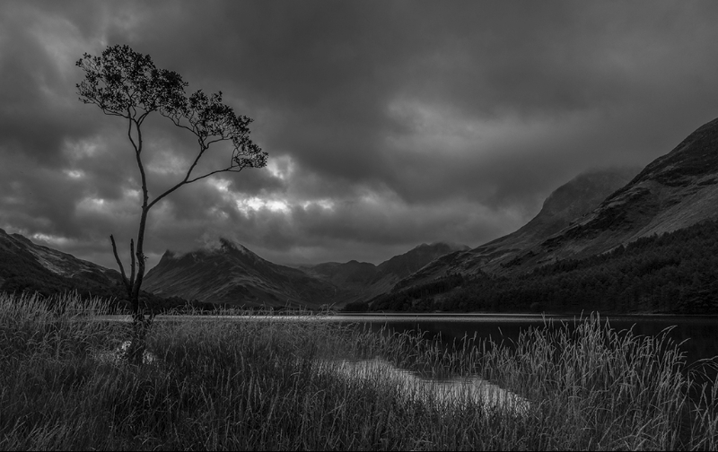 LONE TREE BUTTERMERE by Lester Woodward