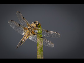 4 SPOT CHASER by  Lester Woodward