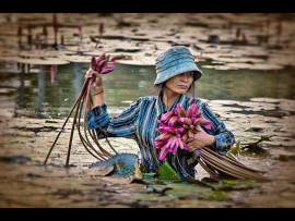 LOTUS PICKER by Lester Woodward