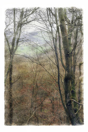 WOODLAND AUTUMN MIST by John Young
