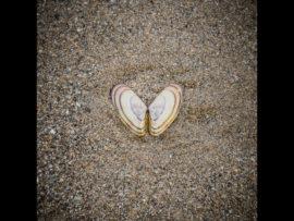 NEWGALE SANDS BUTTERFLY by Lois Webb