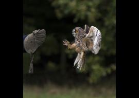OWL FOCUS by Paul McKinley