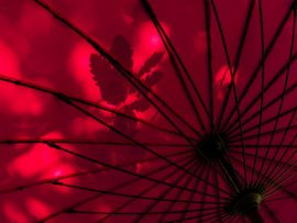 BROLLY STRUCTURE by Steve Roper