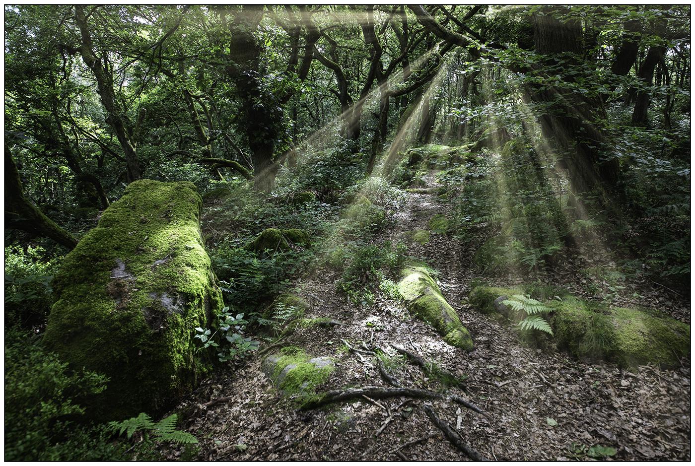 WOODLAND FLARE by Nigel Stewart-2